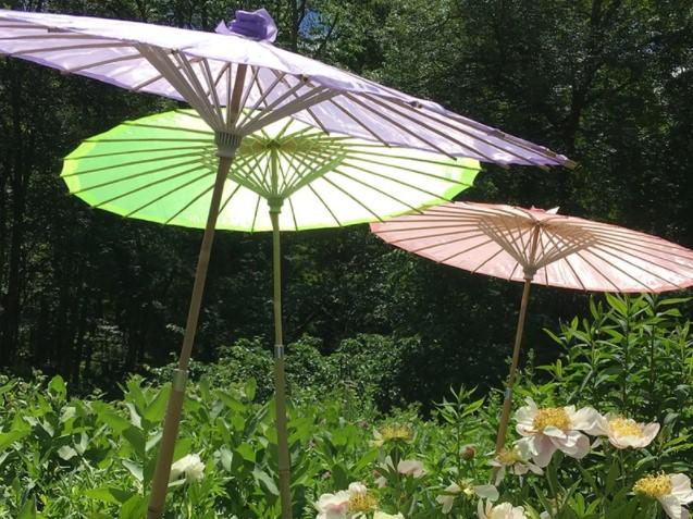 Umbrellas to shade plants