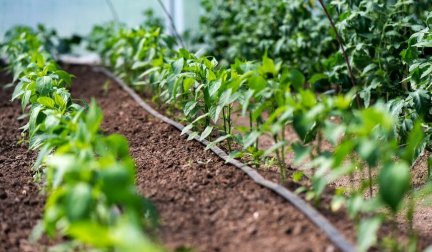 Tips for using an irrigation system