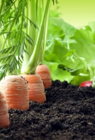 Top 15 Easiest Vegetables to Grow from Seed