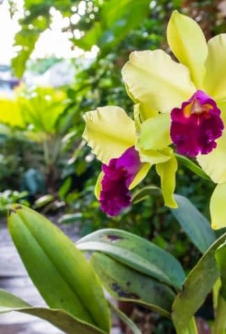 Can I Use Orchid Fertilizer on Other Plants