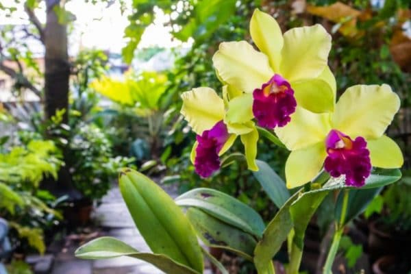 Can I Use Orchid Fertilizer on Other Plants?