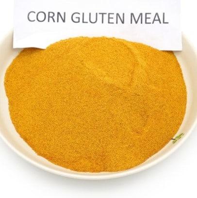 Use corn gluten meal for clover killer