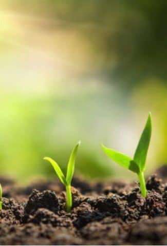 Do Seeds Need Light to Germinate?