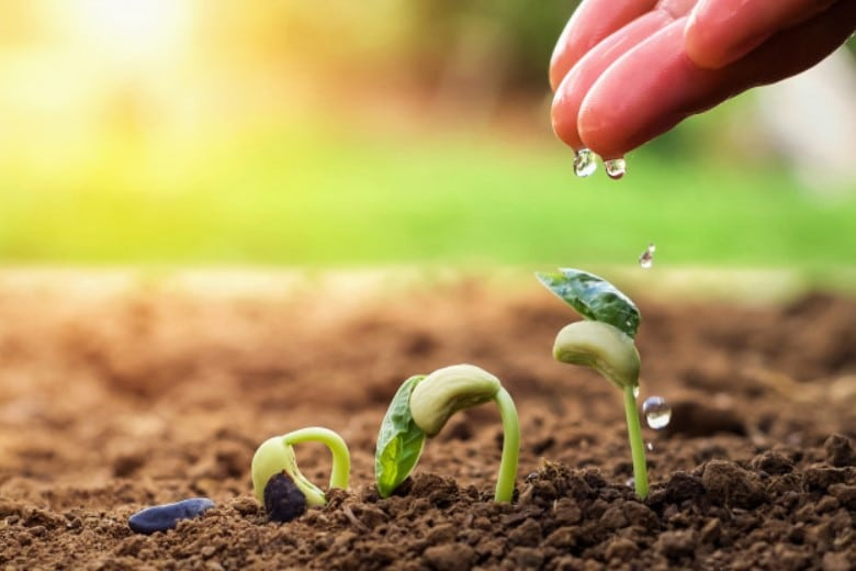 Seeds need water to germinate