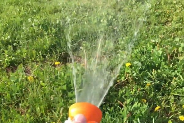 When is it too late to spray for weeds?