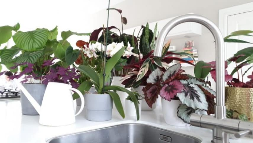 What type of water is best for houseplants?